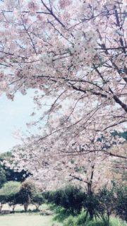 桜咲く春なのに⁂